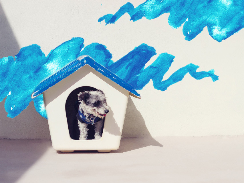 P U P P Y  L O V E  #freetoedit #dailyremix #dailyinspiration #dailyedit #watercolor #blue #stroke #dog #cute #house #remixit