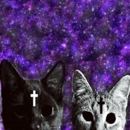 freetoedit catsremix backgroundscreen catlover crazycatlady
