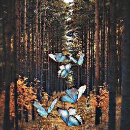 butterflybrush freetoedit