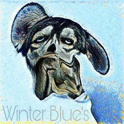 freetoedit husky warped wintertime winterblueseffect