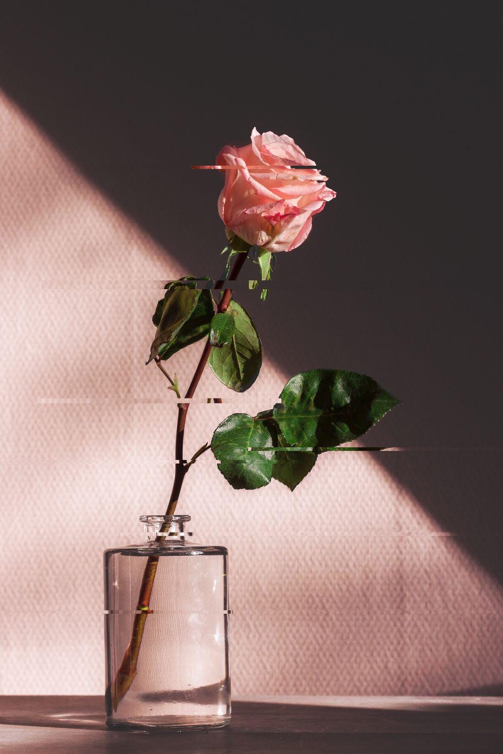 Glitched Love Rose Glitch Pink Vintage Tumblr Edit Mye