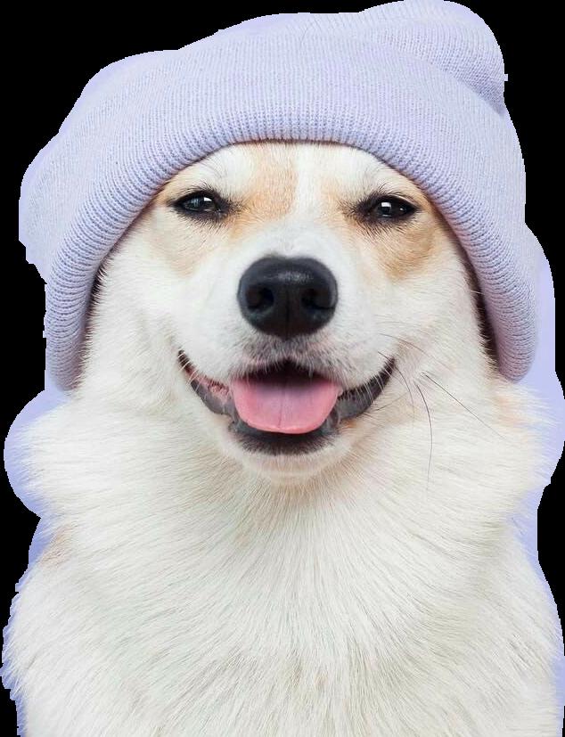 #dog #doglover #doglover🐕 #petsandanimals #pets & animals #doggy #cute