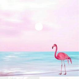 cool tumblr pink rosa