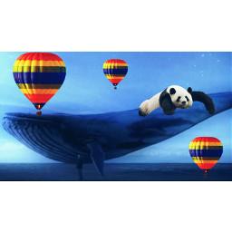 osopanda🐼 ballena🐋 globoaerostatico osopanda ballena