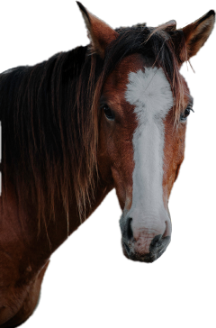 freetoedit schorse horse cheval equitation sccowboy