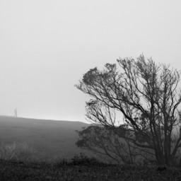 freetoedit black foggy tree