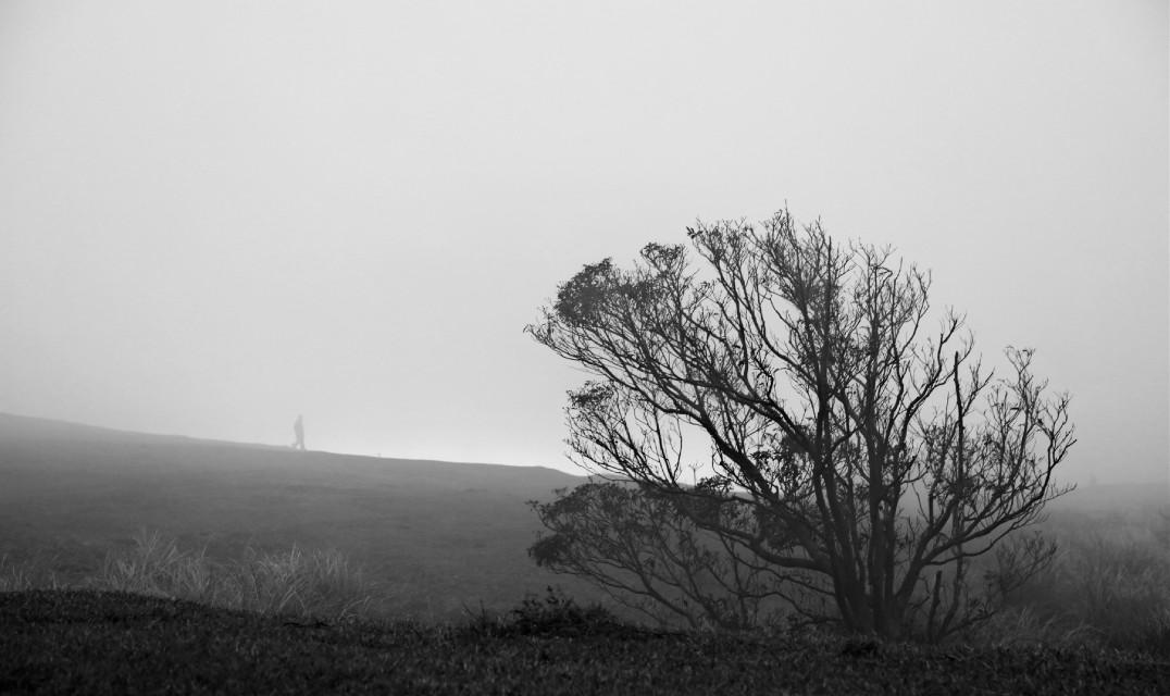 #freetoedit#Black and White#foggy#tree