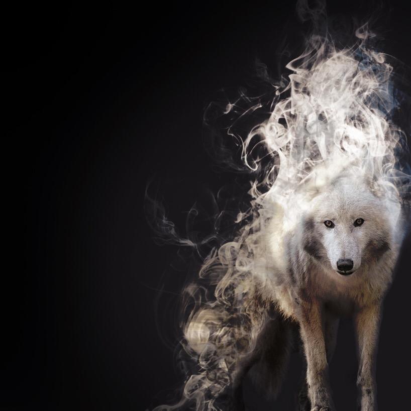 картинка волка из которого выходит дым что тобико это