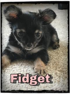 puppylove fidget justtodarncute ittybitty freetoedit