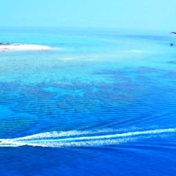 freetoedit sky sea bird ocean