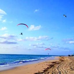 freetoedit sky ocean bird seaside