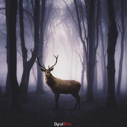 imagination_infocus myedition surrealism nature forest