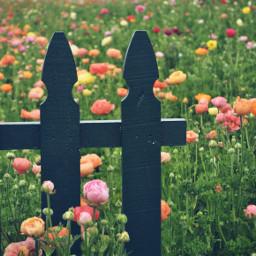 flowers fence flowerfield carlsbad california