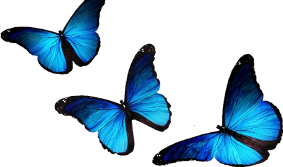 butterfly blue beauty artists creative freetoedit