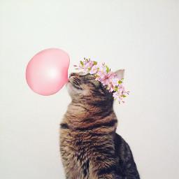 freetoedit timon cat