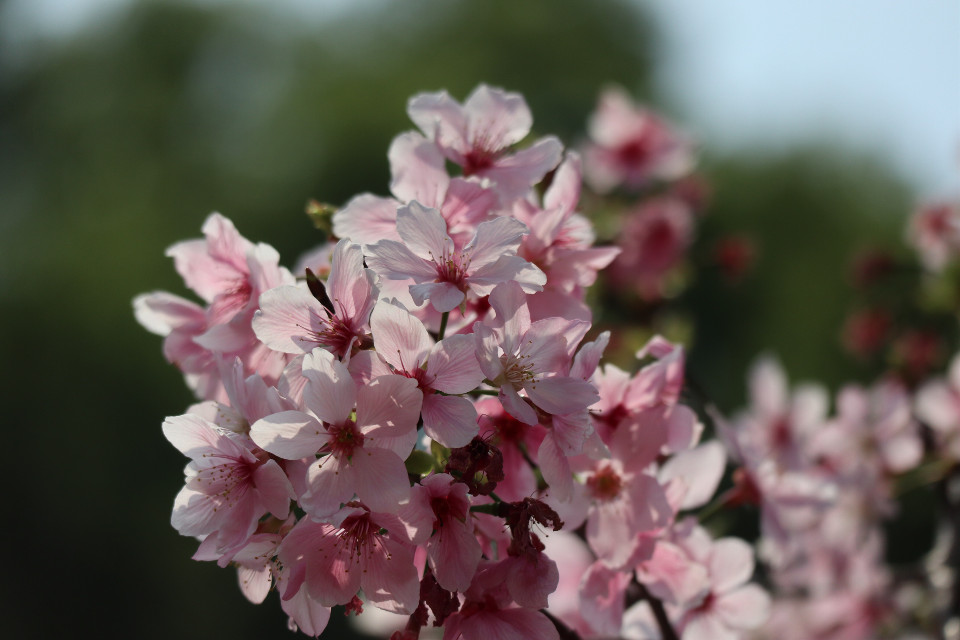 #interesting #photography #blossom #nature #spring #freetoedit