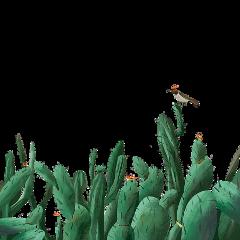 cactus desert ftestickers freetoedit