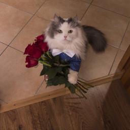 freetoedit remix temixit cat flower