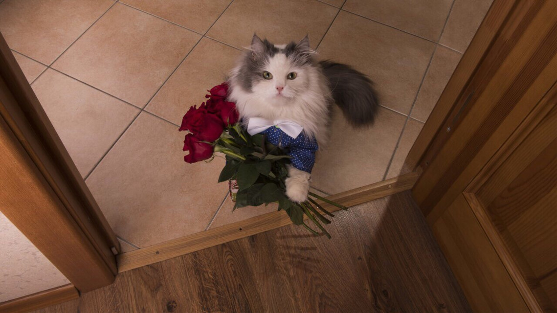 #freetoedit #remix #temixit #cat #flower #roses #red