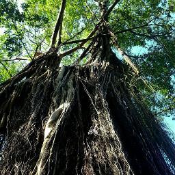 pctrees pov tree artistic photography