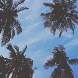 freetoedit beach tree travel trees day