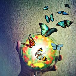 freetoedit remix butterfly doubleexposure