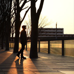 freetoedit japan photography silhouette lightandshadow