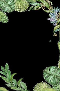 plants tropical jungle leaves border freetoedit