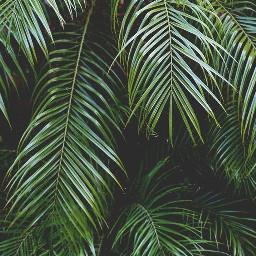 plantbackgrounds backgrounds freetoedit plants nature