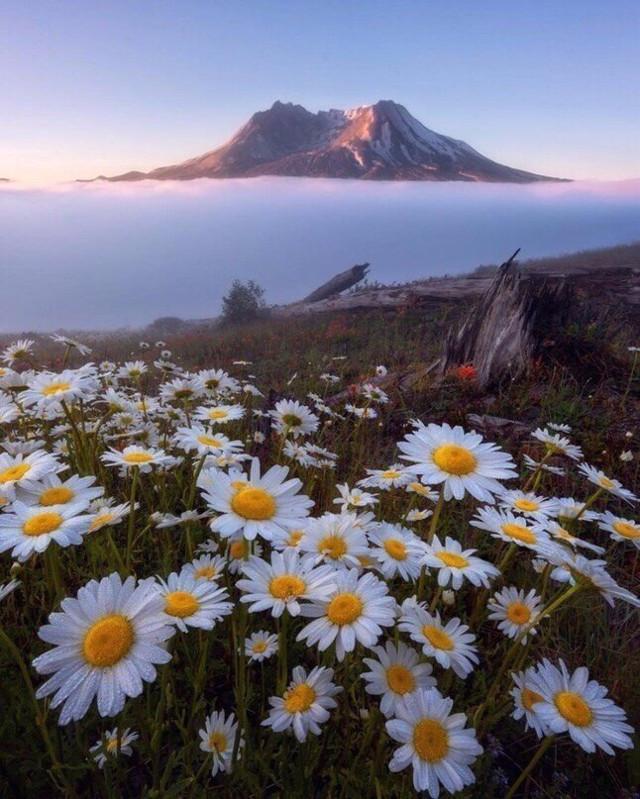 #freetoedit #remix #remixit #landscape #nature #mountains #flowers #chamomiles #clouds #photo