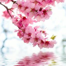 freetoedit remix remixit pink flowers