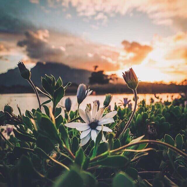 #freetoedit #remix #remixit #landscape #flowers #nature #clouds #sea #mountain #atmosphere #photo