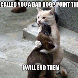 freetoedit dog cat