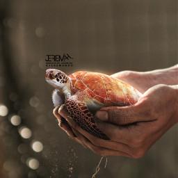 turtle ftestickers hand fingers bluredbackground srcsosnappy ecinmyhands freetoedit