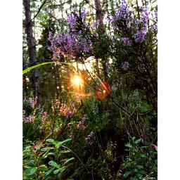 pcsunset sunset nature naturelovers naturesbeauty