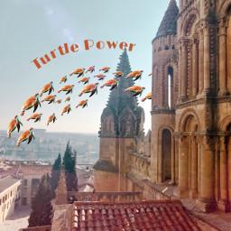 srcsosnappy sosnappy freetoedit turtle turtles