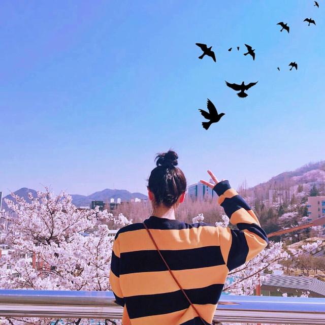 이 모든 게 다 꼼인 것 같아🌸 #quotesoftheday #cherryblossom #spring #nature #seoul #photographer  #photographychallenge  #iphoneography #picsarteffects #행복 #freetoedit