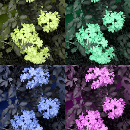 ecpopart popart flores flowers plumbago