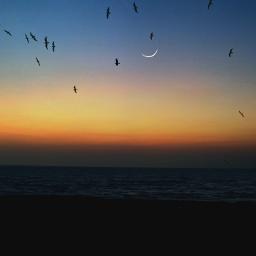 freetoedit evening sunset birds photography