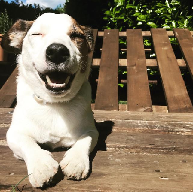 #happy #etc_jrt #mydog #felicità #happyday #spring