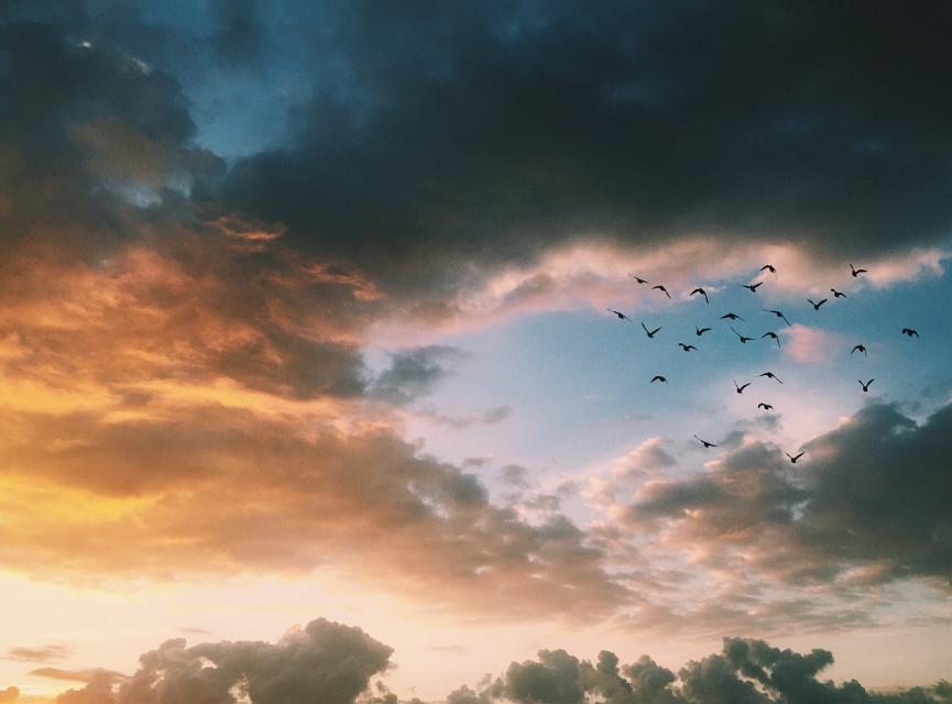 #freetoedit #sunset #spring #clouds #sky #birds #sun #sunny #picsart @picsart