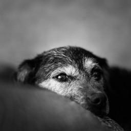 petsandanimal dog blackandwhite pet photography