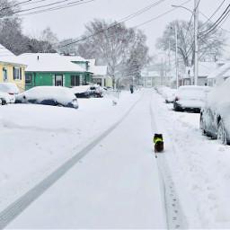 freetoedit snow storm dog pets pcbadweather