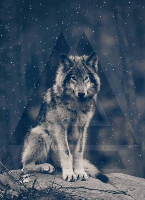 A Wolf Wallpaper Edited You Can Add Your Own Text If