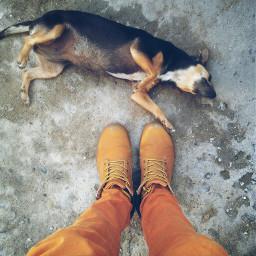 freetoedit dog perrito mascota floja