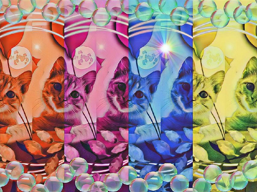 #freetoedit #kitty #colorful #bubbles #bubblebrush