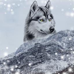 freetoedit eyeart wolf hopeyoulikeit like4like