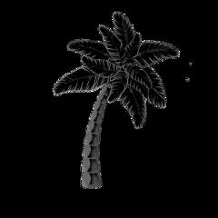 oceanlove palmtrees poparteffect black freetoedit