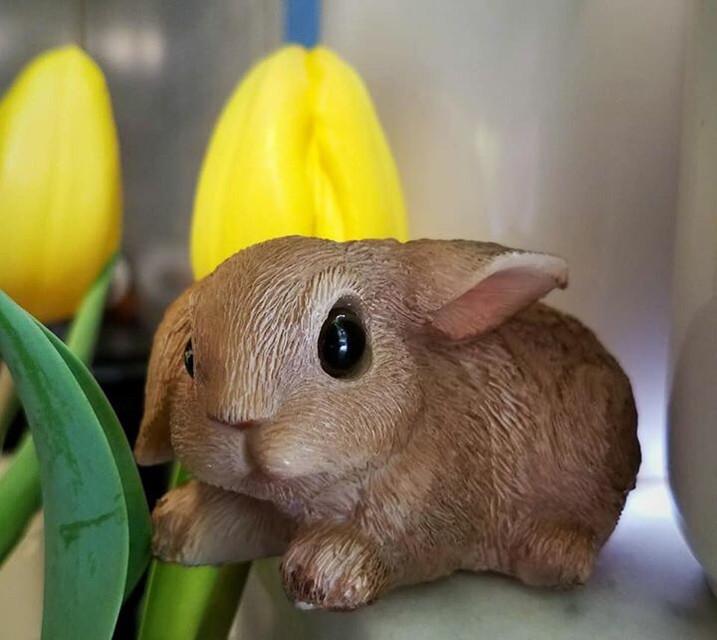 #bunny #easter #tulips