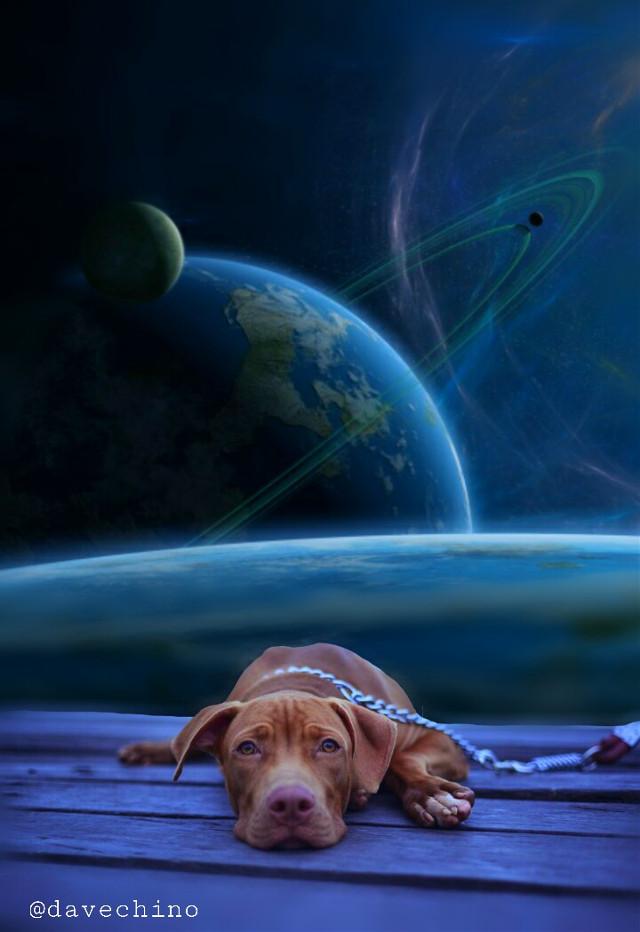 #dog #galaxy #universe @freetoedit @picsart #surreal #surrealist #myedit